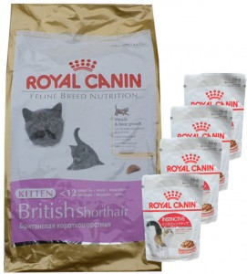 Royal Canin British Shorthair Kitten +  4 x 85g Royal Canin Instinctive Frischebeutel GRATIS