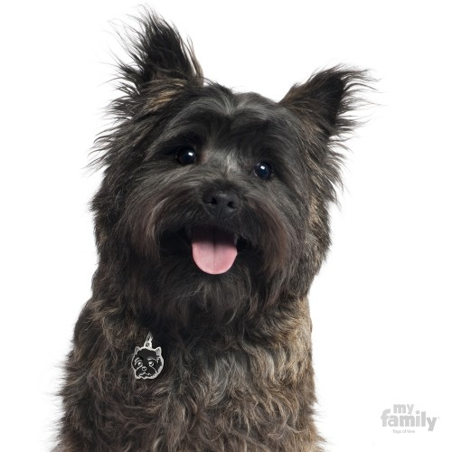 0026872_cairn-terrier-dog-tag.jpeg